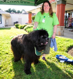 Despite his size, 5-year-old Newfoundland Puck is not intimidating to kids, says owner Tara Rowe. The team has been working with Paws for People for three years.