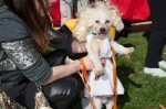 Col. Popcorn attends the Howl-o-Ween party in drag as Marilyn Monroe