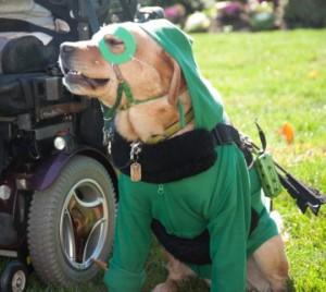 Service dog Stephen as The Green Arrow.