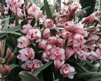 Orchid Extravaganza is running through March 29 at Longwood Gardens.