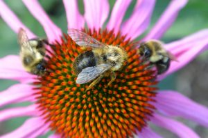 Native Plants for Native Pollinators, at 7 p.m. on Thursday, April 30 at Newline Grist Mill.