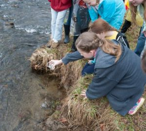 Students release fingering brook trout into Pocopson Creek as part of the Trout in the Classroom program.
