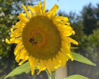 The Land Conservancy of Southern Chester County will host Open Hive Day on Saturday, Oct. 3, at New Leaf Eco Center in Kennett Square.