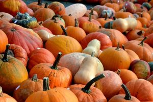 A plethora of pumpkins will mark the 37th Annual Pumpkin Days at Tyler Arboretum on Saturday, Oct. 10, and Sunday, Oct. 11.