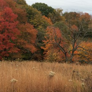 Longwood Gardens' Meadow offers a series of scenic trails.