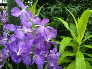 Longwood's Orchid Extravaganza is scheduled to open on Jan.