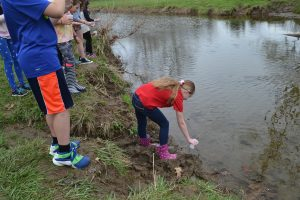 Students take turns easing their fingerlings into the Pocopson Creek.