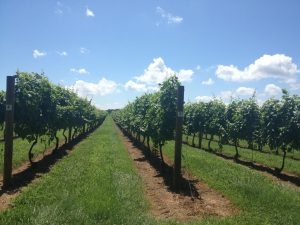 The Penns Woods Winery will be the venue for