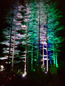 Evergreens in Peirce's Woods help light the pathway connecting installations for 'Nightscape.'