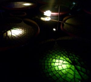 One of the new additions to the 2016 Nightscape are the underwater lights beneath the water lilies and platters.