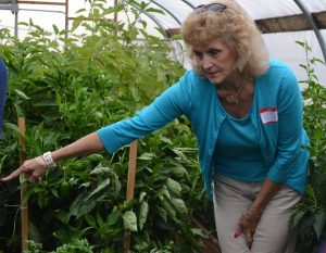 Teacher Betsy Ballard points out the variety of crops in one of the high tunnels.