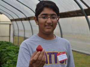 Chirag Choudray, a seventh-grader, produces a strawberry from one of the Patton Project Gardens' high tunnels.