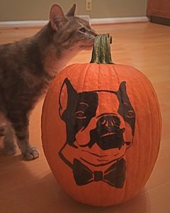 Paws Painted Pumpkin