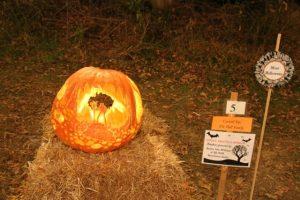 The pumpkin was judged 'Most Halloween.'