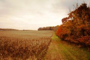 Bryn Coed Farm contains myriad