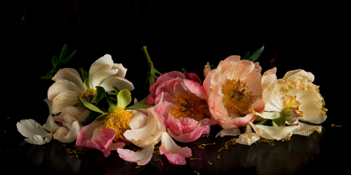 Peonies by Robert Porter