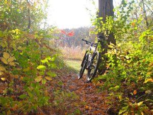 Woolly Trail w mtb