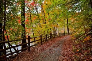 """""""Fall in Chester County"""" by Kathryn Mims."""