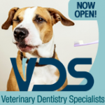 VDS – Veterinary Dentistry Specialists